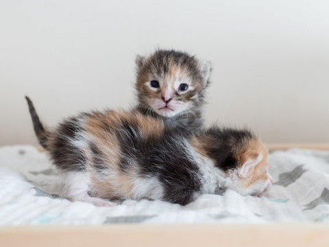 kittens safe and sound -MissMeowni.com