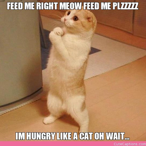 hungry cat needs food -MissMeowni.com