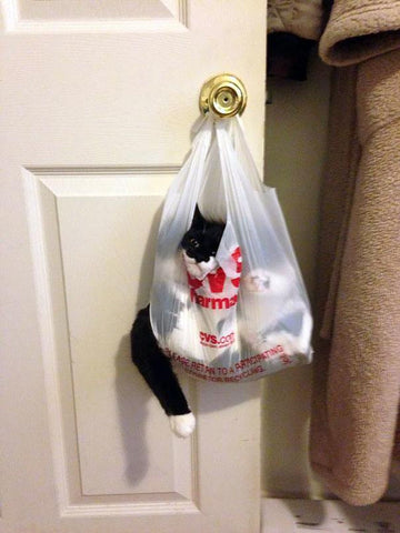 silly cat stuck in bag -MissMeowni.com