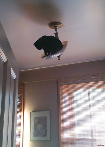 cat stuck on light -MissMeowni.com