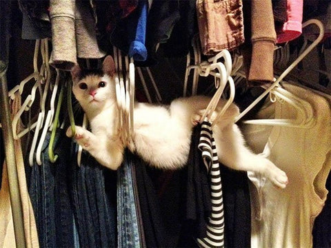 cat stuck in closet -MissMeowni.com