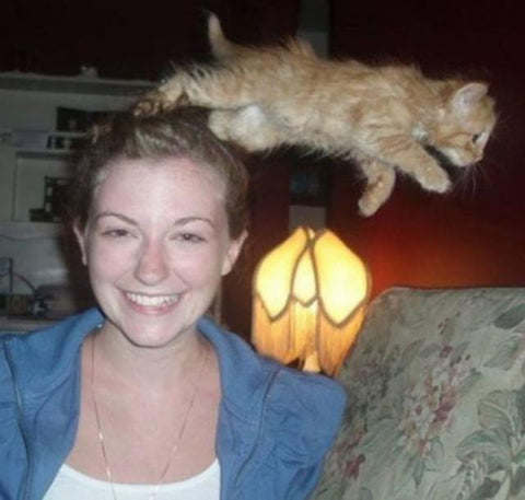 flying cats are a thing -MissMeowni.com