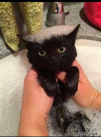 cute kitty in bath -MissMeowni.com