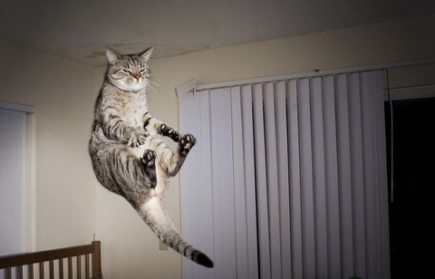 toe touch funny cat -MissMeowni.com