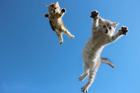 cute jumping kittens -MissMeowni.com