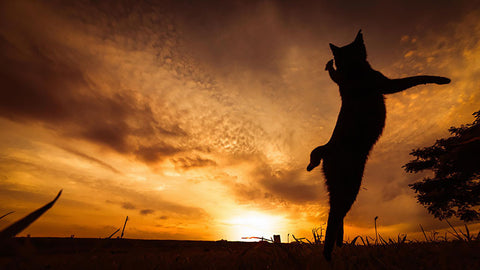 ninja cat sunset -MissMeowni.com