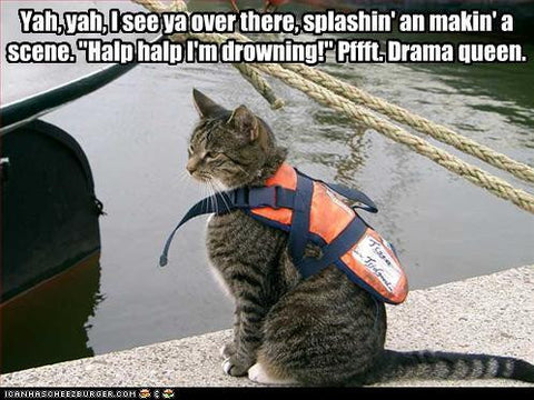lifeguard cat doesn't drama -MissMeowni.com