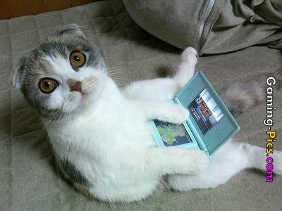 Gaming Cat on DS -MissMeowni.com