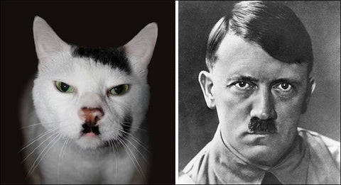 Hitler Cat is angry -MissMeowni.com
