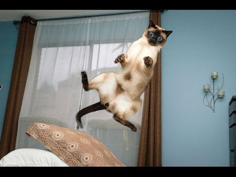 funny cat jumps -MissMeowni.com
