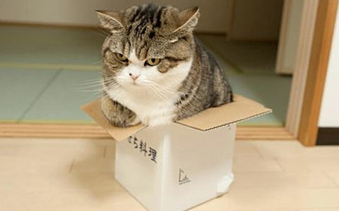fat cat in box -MissMeowni.com