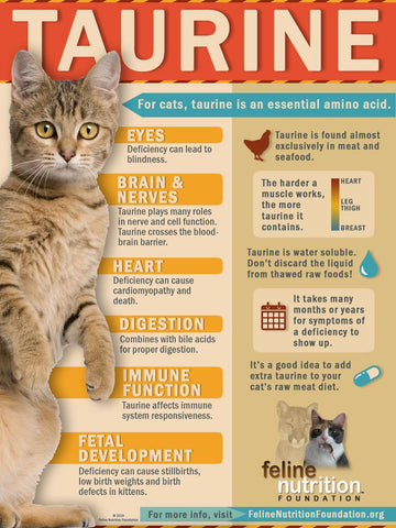 taurine gives cats vision -MissMeowni.com