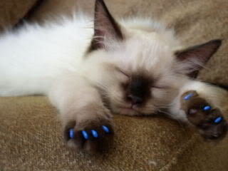 cat with soft paws -MissMeowni.com
