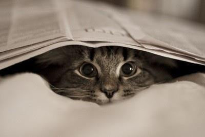kitty hiding under newspaper -MissMeowni.com