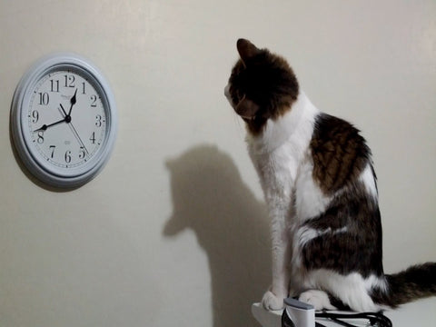 cat doesn't want to wait -MissMeowni.com