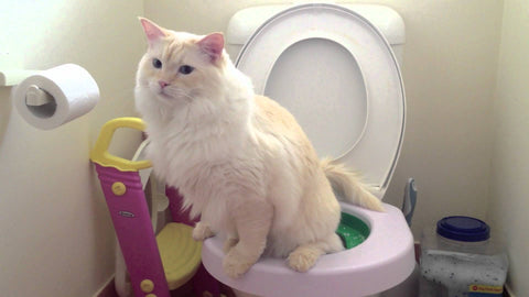 cat using toilet -MissMeowni.com
