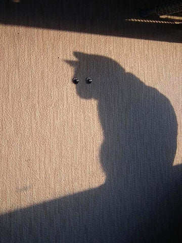 big cat shadow -MissMeowni.com