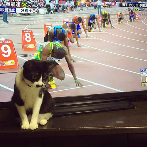 cat waiting to race -MissMeowni.com