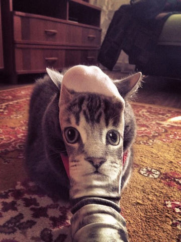 cat with sock face -MissMeowni.com