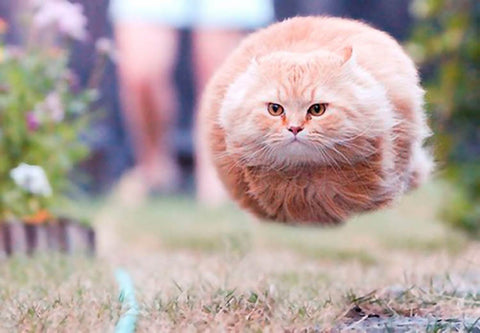 I believe I can fly -MissMeowni.com