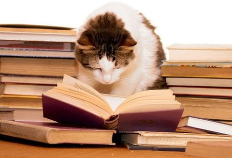 study cat reading -MissMeowni.com