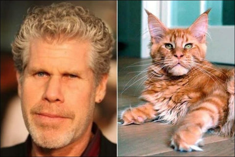 Perlman as a cat -MissMeowni.com