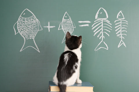 cat doing fish math- MissMeowni.com