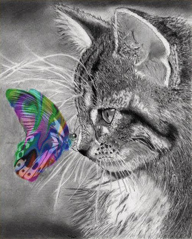 cat with butterfly -MissMeowni.com