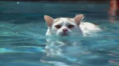 cat loves to swim -MissMeowni.com