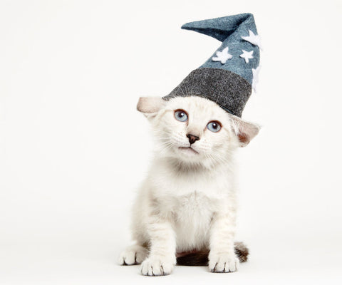 kitteh wizard needs home -MissMeowni.com