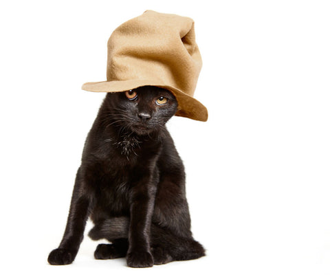 cat with big hat -MissMeowni.com