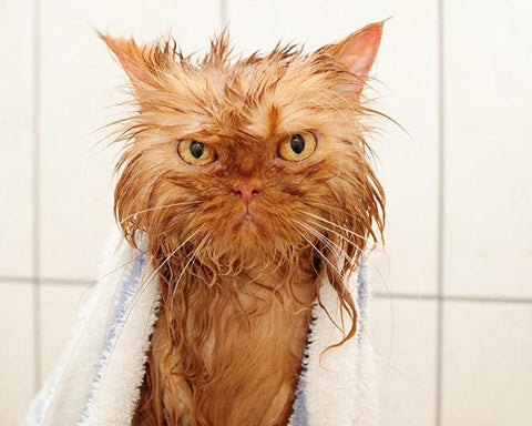 cat says no to bath -MissMeowni.com