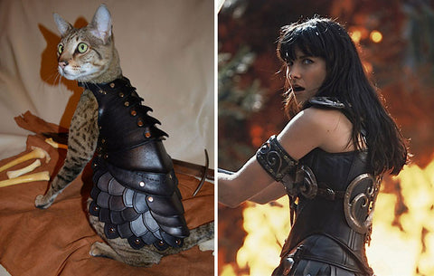 Xena cat unafraid -MissMeowni.com