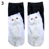 White Cat Staring Socks