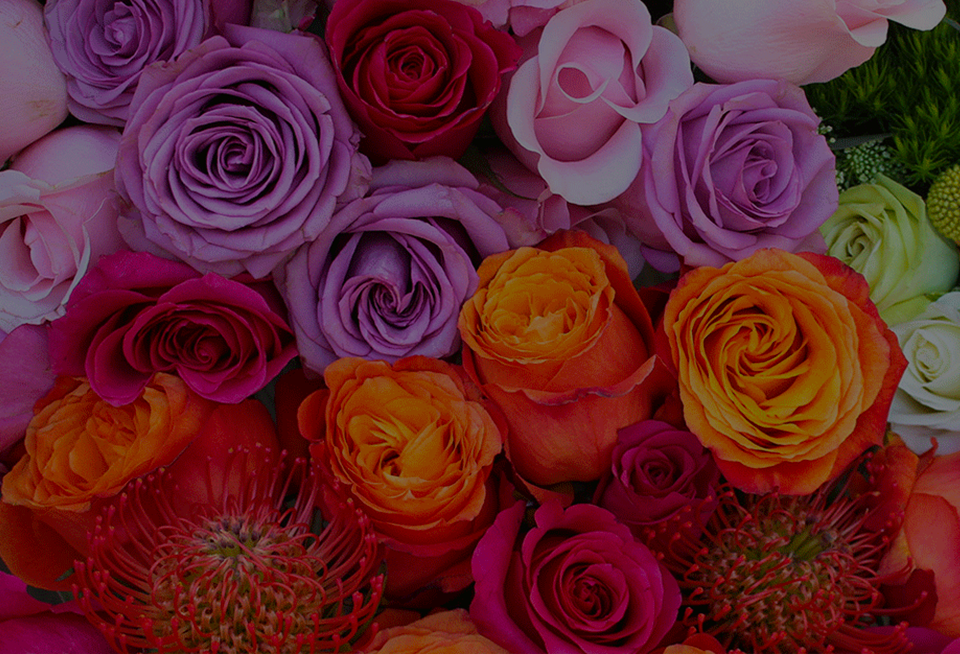Rose Color Meaning: Ultimate Guide to Symbolism of 24 Shades