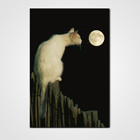 Tableau photo chat le Chat et la lune