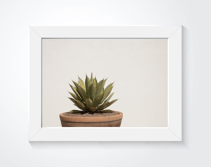 The Agave | Photography Print