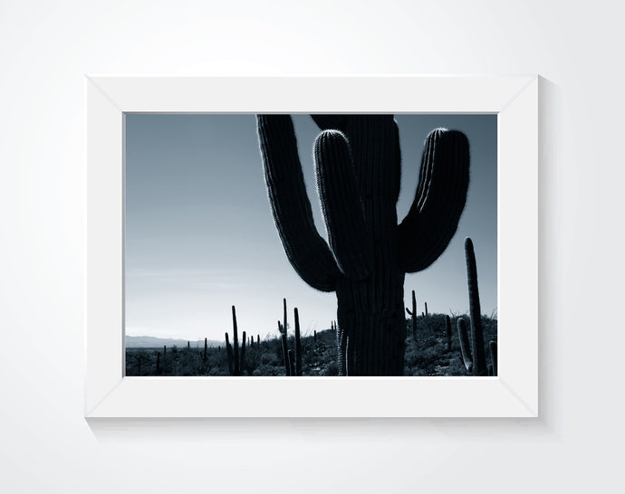 Framed photo of cacti on a wall.