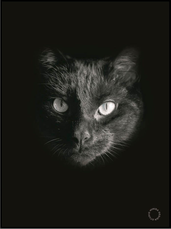 Plakat - Black Cat - Minida