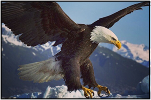 COMPETE Nation Embrace The Underdog Bald Eagle