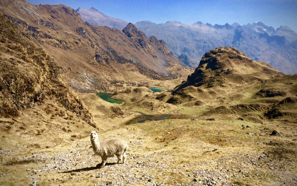 The Lares Trek/Run - NEW 2 DAY TREK!