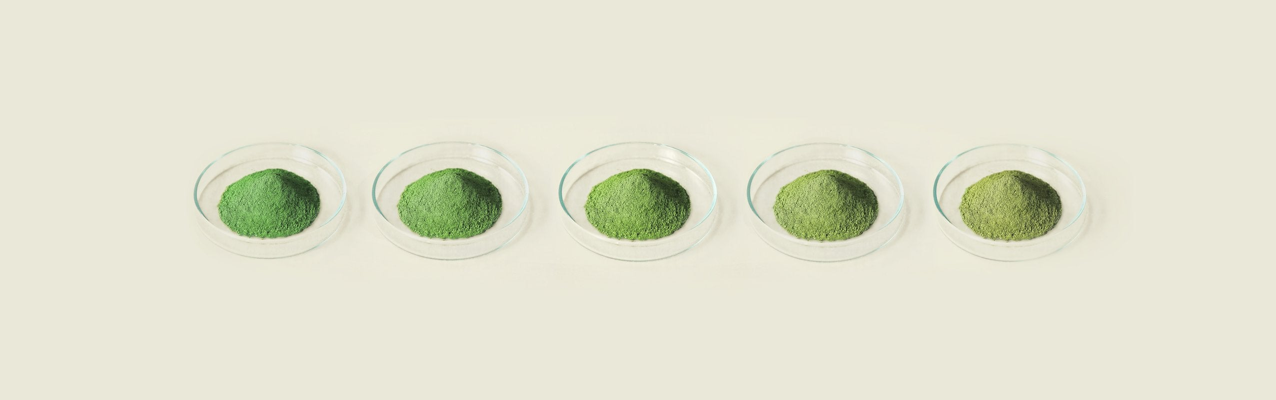 Our Matcha Range