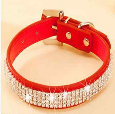Personalized Pet Collar - Order Today!