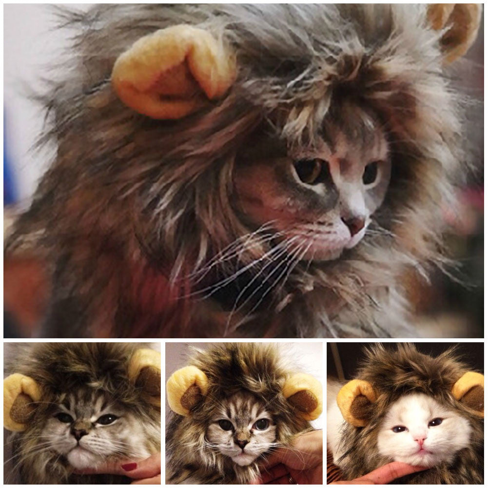 Lion Hat Costume for Cat - Order Today!