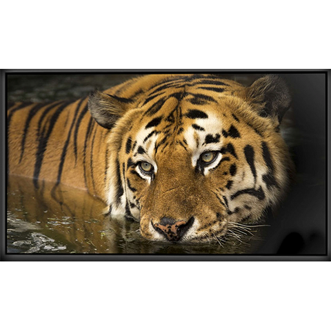 "Image of Elunevision Reference Studio 4K SLIM Frame Screen - 0.75"" Frame"