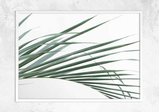 Palm Leaves on White