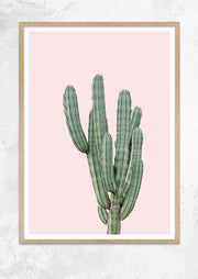 Cereus Jamacaru in Dusty Pink No I