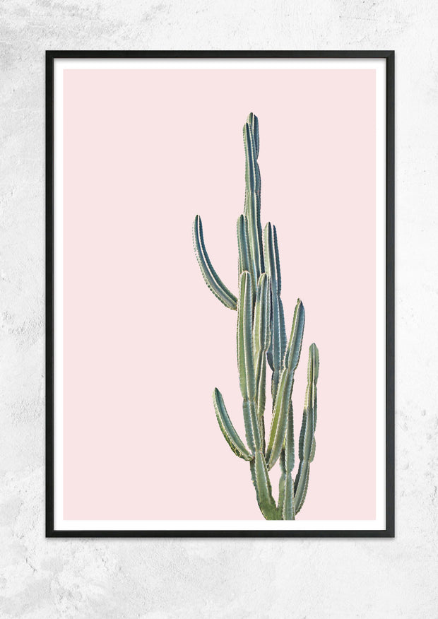 Cereus Jamacaru in Dusty Pink No II