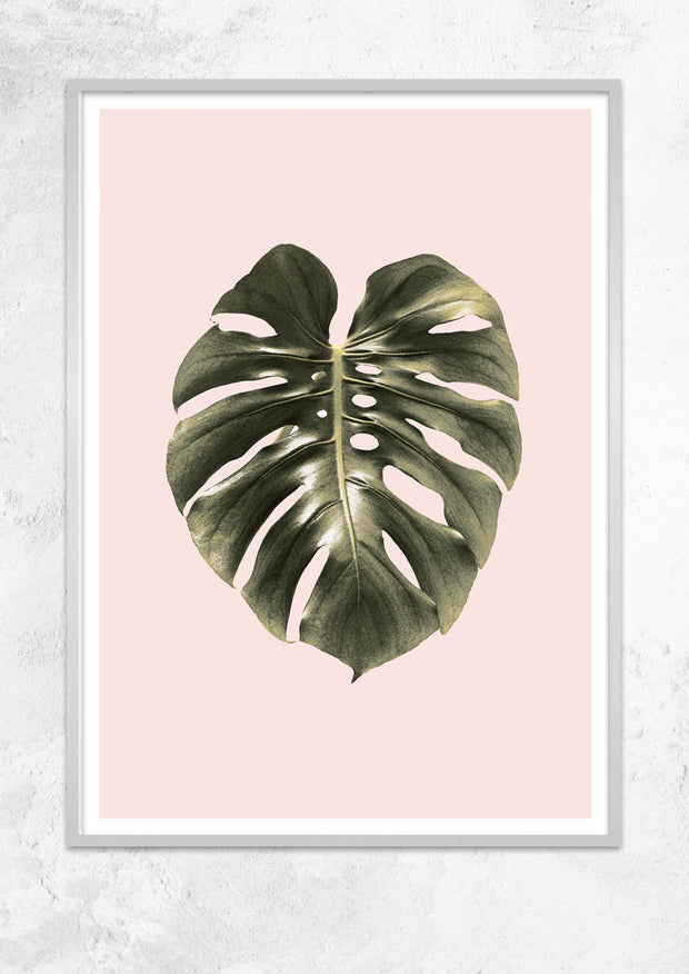 Monstera Leaf
