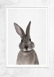 Nursery Animals - Rabbit